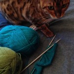 Cat with knitting needles